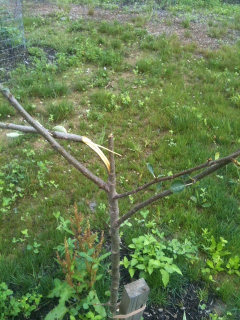 "I cut off the broken branches leaving very little ""tree"" left."
