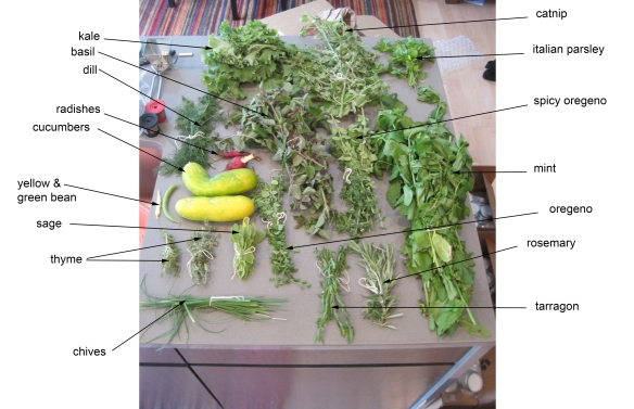 This is yesterday's harvest. There's more where this came from. I bet I'll have about six jars worth of dried herbs.