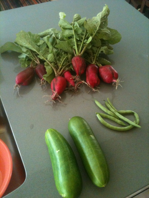 Today's harvest. July 1st, 2014