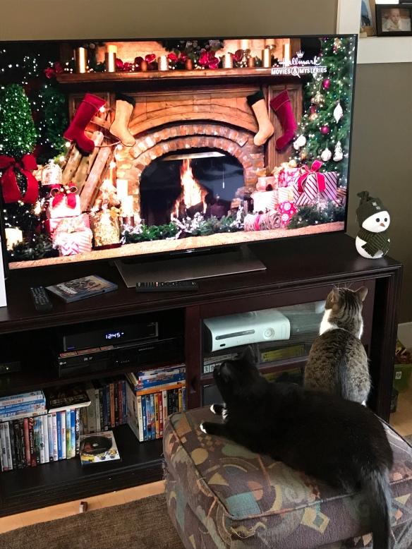 Cats enjoying Happy Yule Log on the new TV